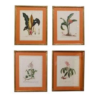 Botanical Prints - Set of 4