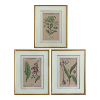 Antique English Botanical Engravings Set of Three