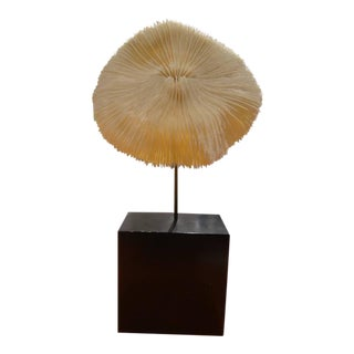 Natural Coral on Pedestal