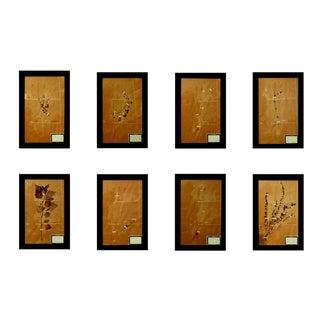 French Framed Botanicals - Set of 8