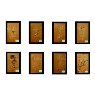 French Framed Botanicals - Set of 8