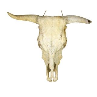 Vintage Longhorn Skull