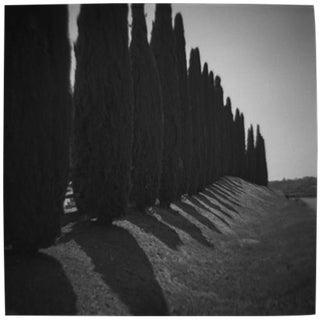 """Cypress Row"" Black & White Photograph"