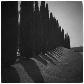 """Cypress Row"" Black & White Photograph"