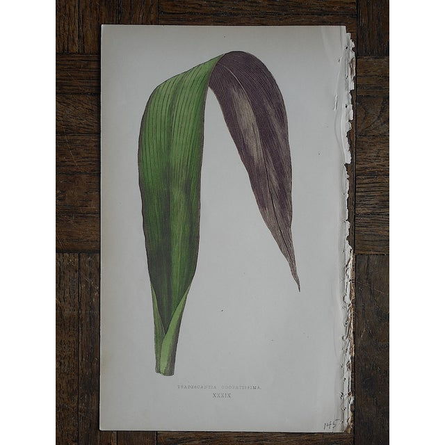 3 Antique Ornamental Leaves Lithographs - Image 3 of 5