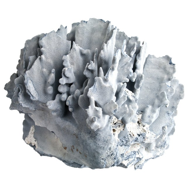 Large Blue Coral Specimen - Image 2 of 4