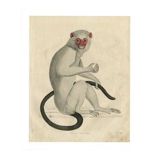 Vintage Monkey Archival Print