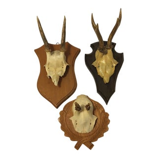 European Roe Deer Trophy Mount - Set of 3