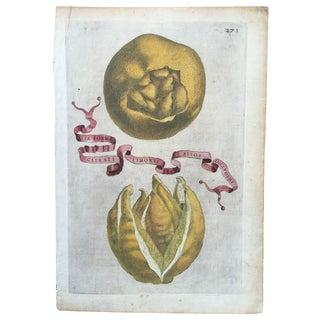 Antique Ferrari Botanical Citrus Fruit Print