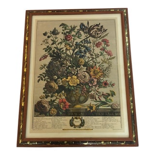 H Fletcher Springs Flowers Botanical Print