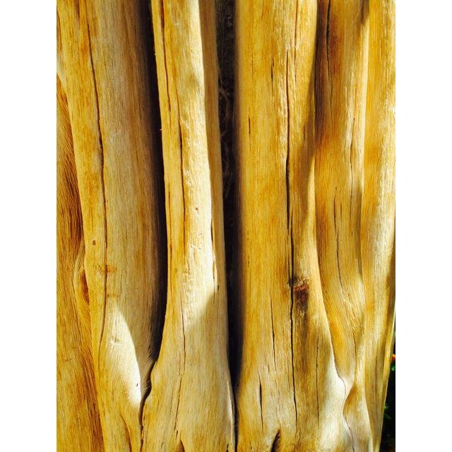 Image of Tall Southwestern Saguaro Cactus Skeleton