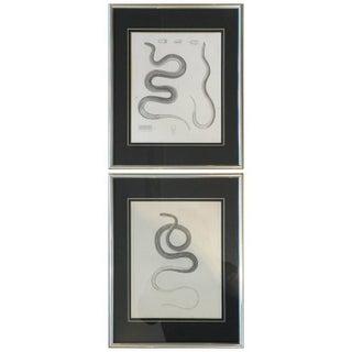 """19th Century """"Serpens"""" Engravings - Pair"""