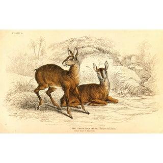 Antique Deer Engraving, 1843