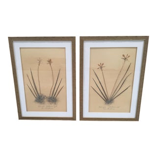Faux Bamboo Framed Pressed Orchids - A Pair
