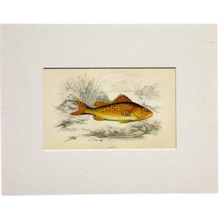 1877 Ruff Fish Chromolithograph