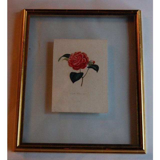 Four J.J. Jung Camellias Pressed Between Glass - Image 5 of 9