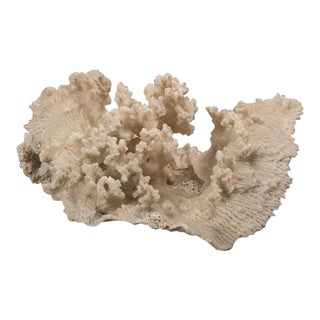 Large Vintage Coral Specimen from the Andaman Sea
