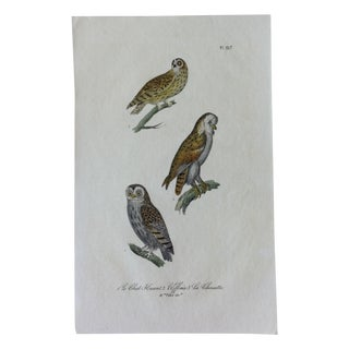 French Hand-Painted Owls Engraving