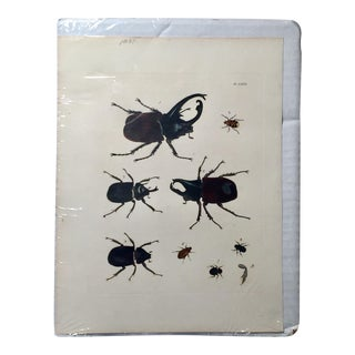 1837 Dru Drury Hand Colored Beetle Engraving Print