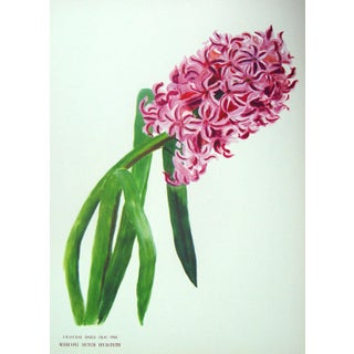 Vintage 1950s Hyacinth Offset Lithograph