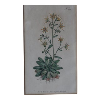 Yellow Hand-Colored Botanical Print