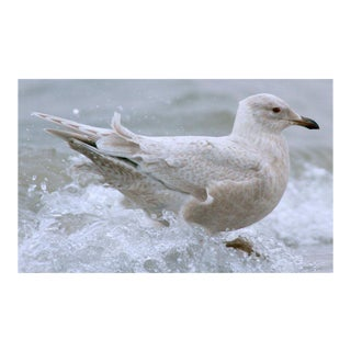 KLEMENS GASSER / THERE WILL BE ICELAND GULLS WITHOUT YOU 20140118 11:50 AM, 2014