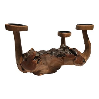 Burl Wood Root Candle Holder