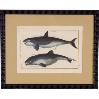 Framed 'Whales' Copper Etching
