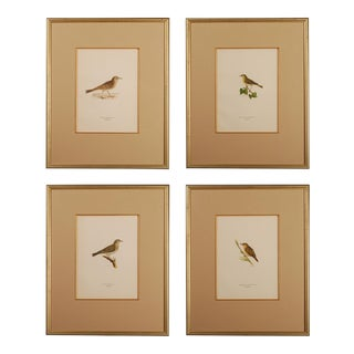 19th C. Chromolithographs of Birds - Set of 4