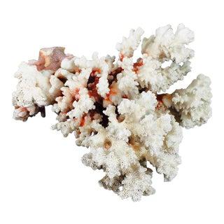 Large Coral Specimen