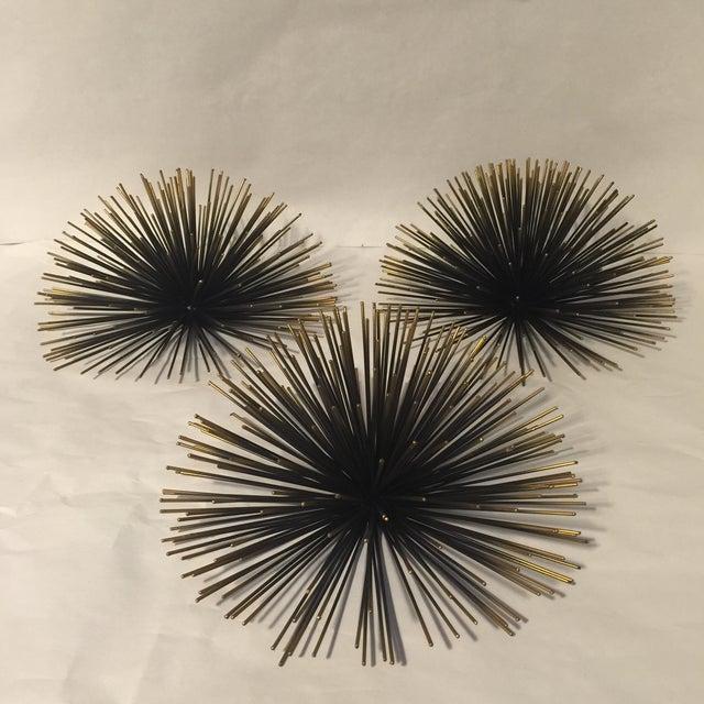 Metal Urchin Wall Decor : Quot sea urchins wall decor set of chairish