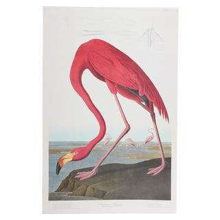American Flamingo - Audubon Leipzig Ed. 1987