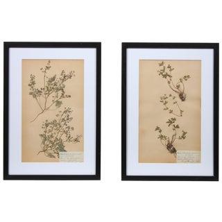 Framed Herbarium Iii - A pair