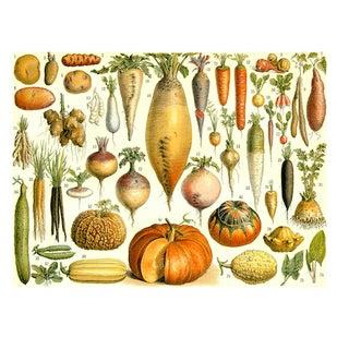 Antique 'Vegetables' Archival Print