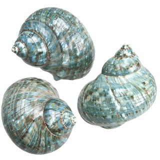 Polished Jade Turbo Shells - Set of 3