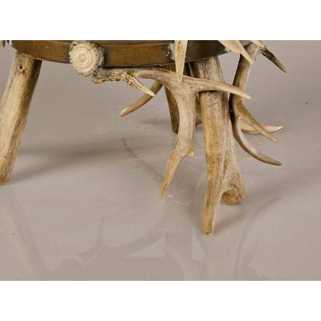 Circular Display Platform Enclosed with Hand Assembled Shed Antler Horn from Scotland c.1875 - Image 9 of 9