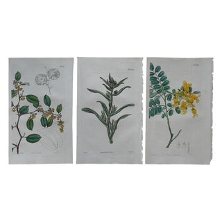 Antique Botanical Engravings - 3