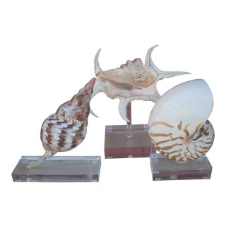 Shells Mounted on Lucite Stands - Set of 3