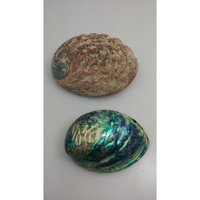 Small Abalone Sea Shells - Pair - Image 3 of 9