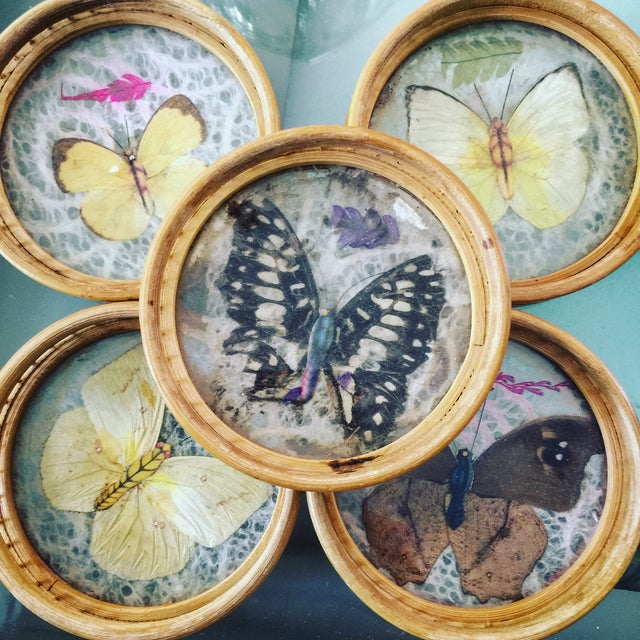 Vintage Butterfly Coasters - Set of 5 - Image 8 of 11