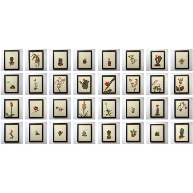 Framed Rock Plants - Set of 32 - Image 2 of 11
