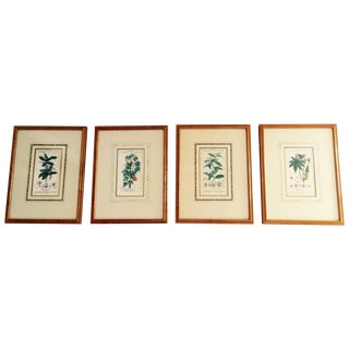 Antique Botanicals by Artist Turpin - Set of 4