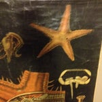 Image of Vintage German Map of the Sea Star