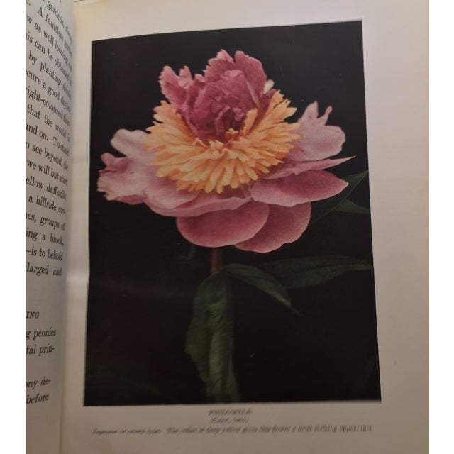 """The Book of the Peony"" by Harding, 1917 - Image 10 of 11"