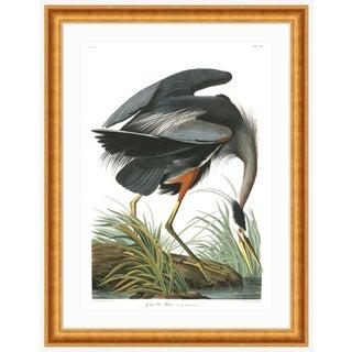 Gold Framed Audubon Great Blue Heron Bird Print from Birds of America Series