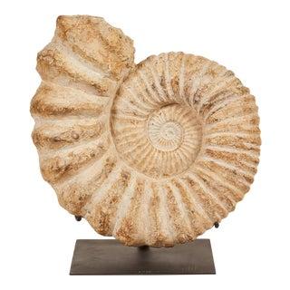 Moroccan Ammonite Stone On Stand
