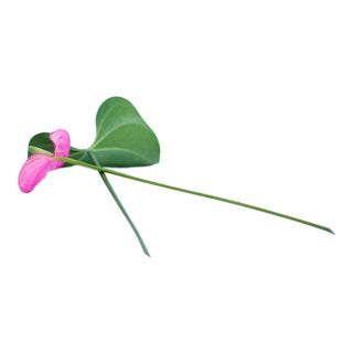 Flowers Crossed in Pink and Green Photograph