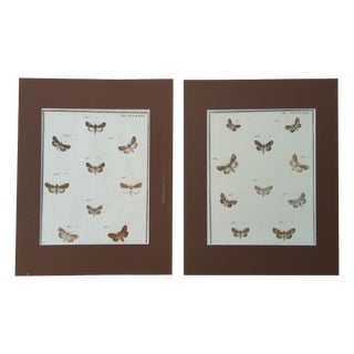 19th-C. French Butterfly Prints - A Pair