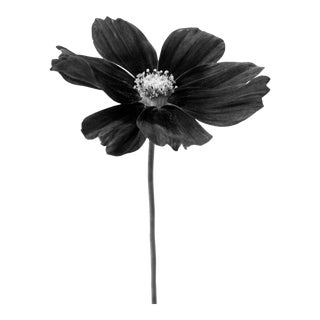 Black Botanical 31 Photograph