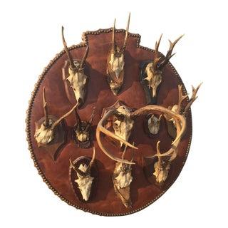 Vintage Roe Buck Mounts Leather Plaque
